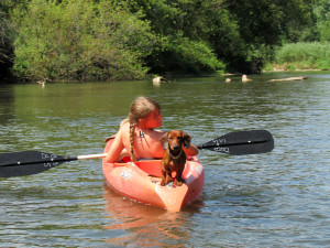 kayaking, dog, Upper Iowa River