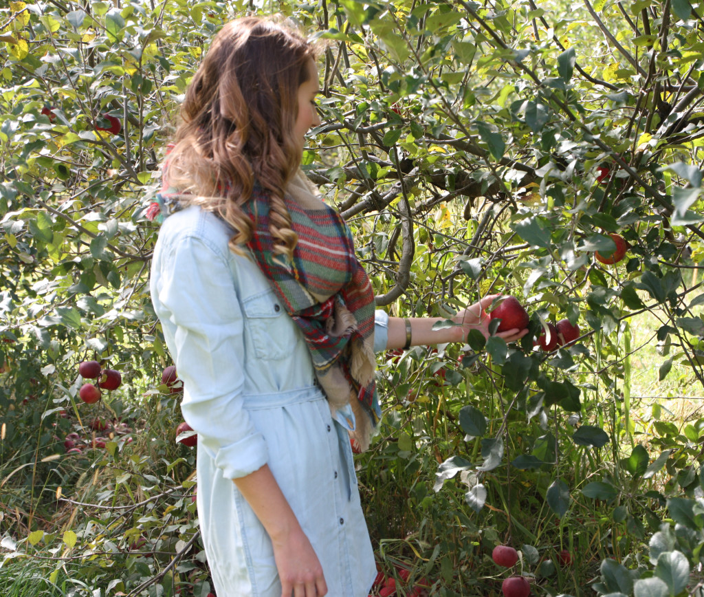 Wilson's Orchard, apple picking, fall