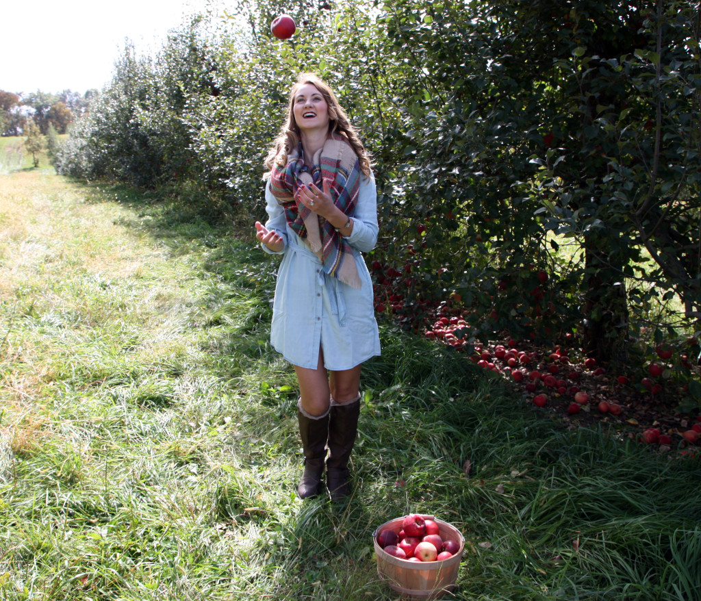 Apple Picking at Wilson's Orchard