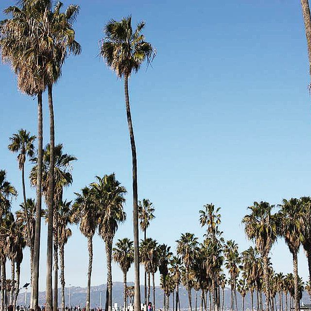 Venice Beach, California, palm trees