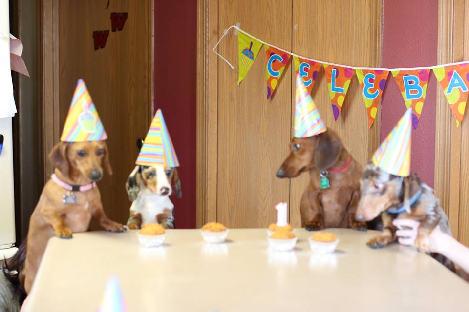 weiner dogs, birthday party