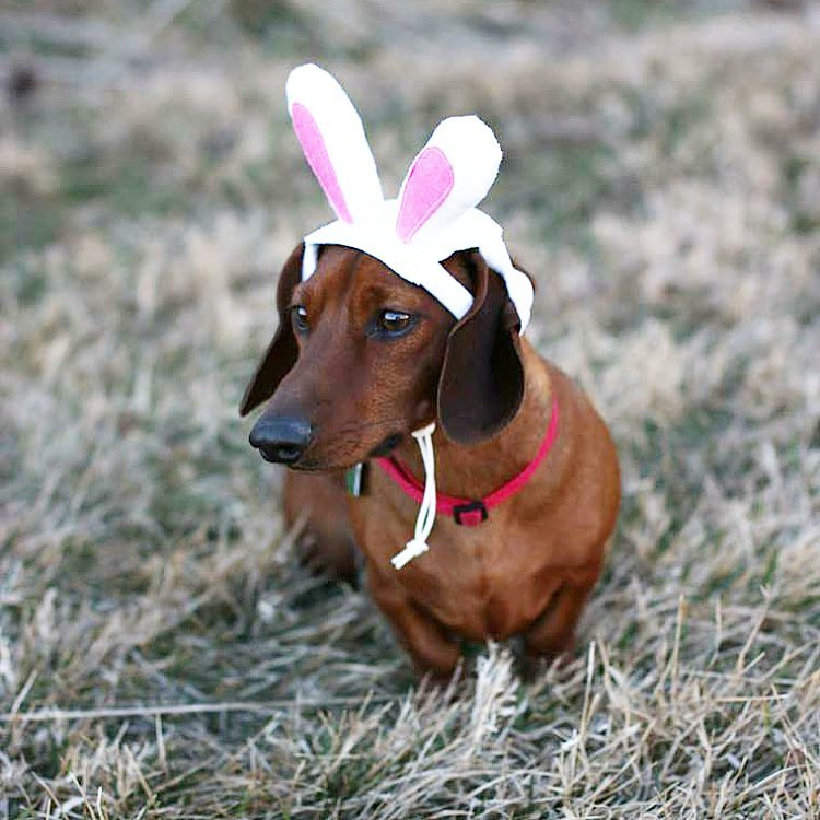 Batman, bugs bunny, weiner dog, Target dog bunny ears, Easter Sunday