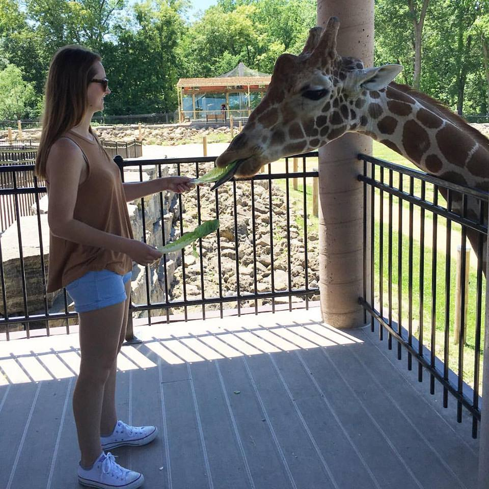 Niabi Zoo, Coal Valley, Illinois, giraffe, feeding giraffes, my favorite animal, zoo