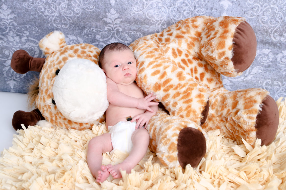 for the love of glitter, newborn photos, baby boy newborn photos, giraffe