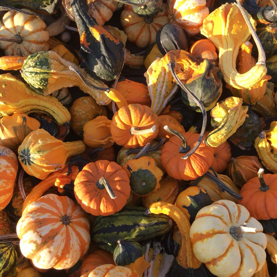 gourds, pumpkins, fall