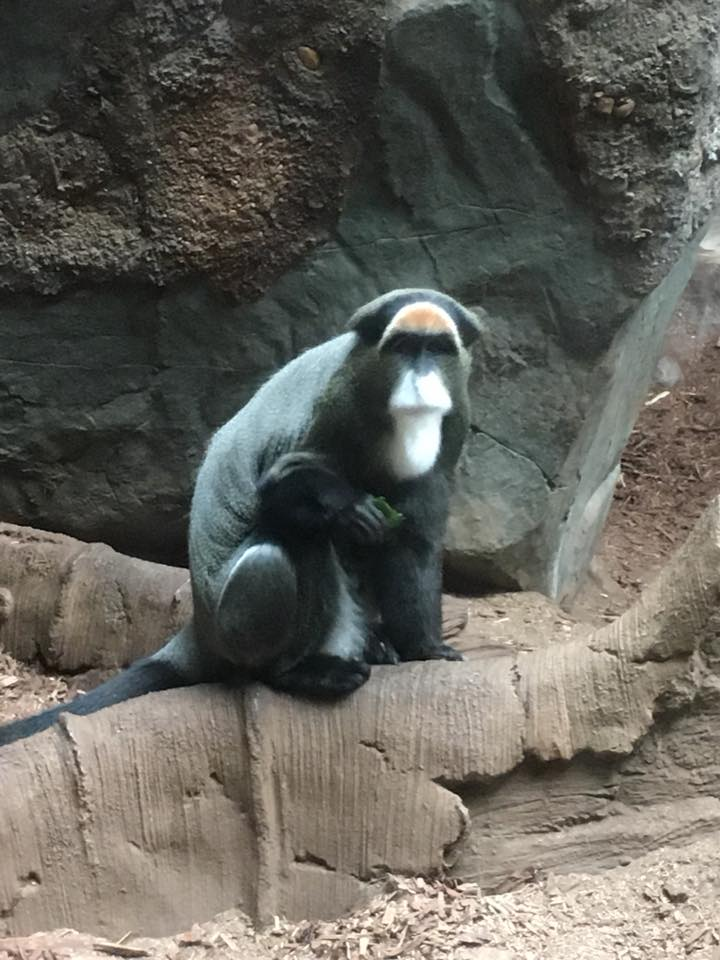 Minnesota Zoo, Minneapolis, Minnesota, monkey