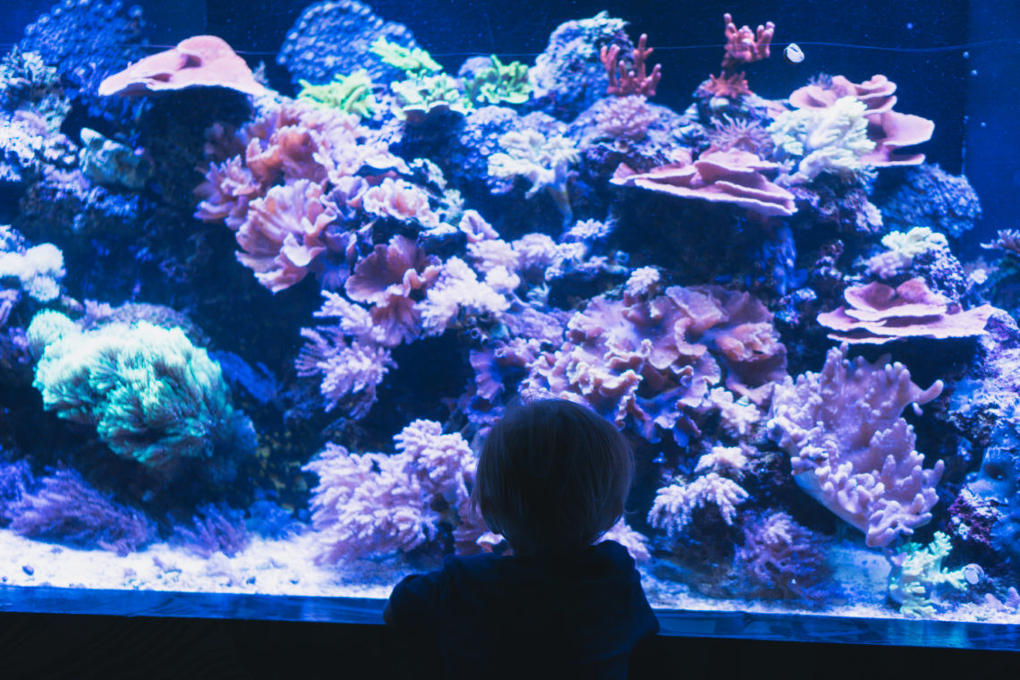 Sea Life Aquarium, Mall of America, Minneapolis, Minnesota